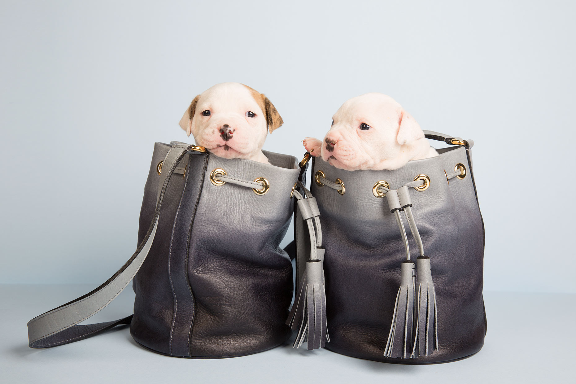 CG_puppies_6625W1